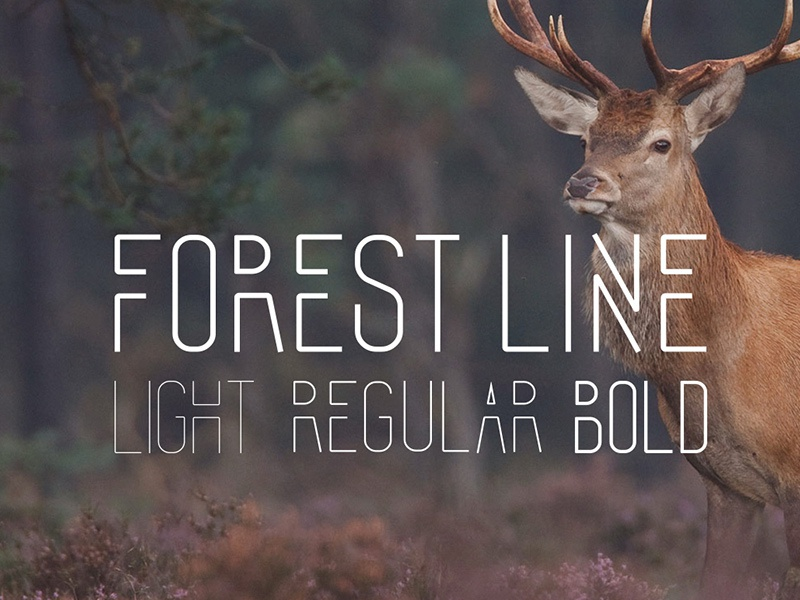 Forest line cond dribbble