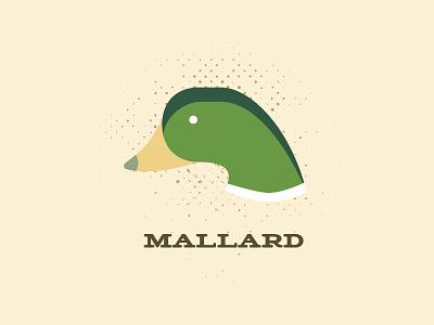 Mallard bird duck mallard illustration vector