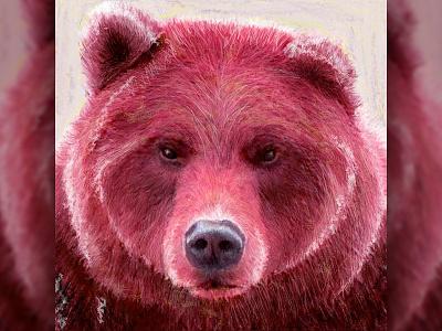 Bear Illustration drawing illustration bear