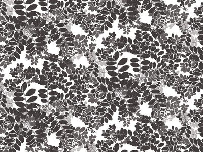 Moringa pattern in black and white