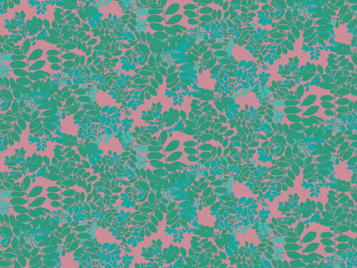 Moringa plant in pink