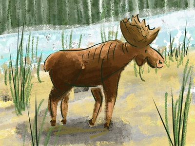 The Mighty Moose maine new england moose digital illustration illustration adobe fresco