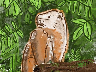 The Noble Woodchuck animal nature woods illustration digital illustration woodchuck