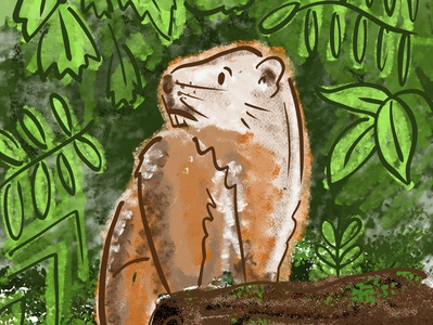 The Noble Woodchuck animal nature woods illustration digital illustration woodchuck