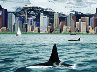Orcas In Seatlle