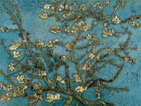 Blossomingalmondtreegrunge