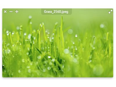 LilyView 1.1 lilyview mac app ui minimal