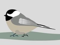 Black Capped Chickadee Illustration