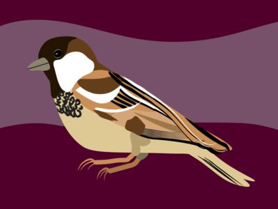 House Sparrow Bird Illustration