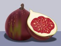 Fig Illustration Kaylan Petrie Fig
