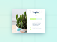 Cactus - Product sheet
