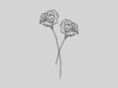 Carnations carnations flowers lineart lineillustration linework illustration