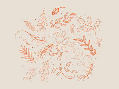 Leaves procreate app procreate sketch november october autumn leaves autumn fall leaf leaves illustration