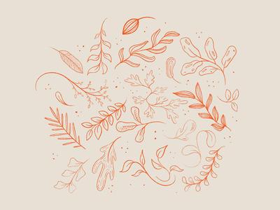Leaves procreate app procreate sketch november october autumn leaves autumn fall leaf leaves illustration