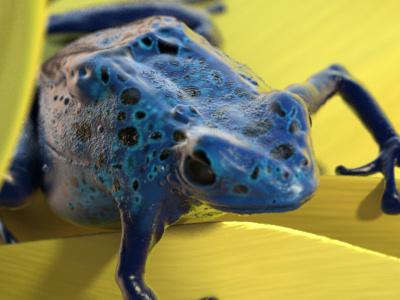 Frog 3d frog