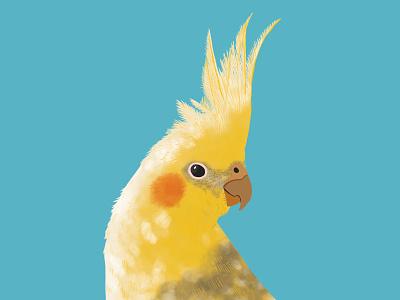 Cockatoo Illustration sketch animal colourful summer blue yellow parrot cockatoo budgie bird drawing illustration watercolour procreate ipadpro ipad