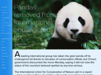 Panda news shot big 01