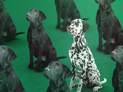 Radler - Regular is boring radler labrador black patch design poster dalmatian green dog pattern graphic