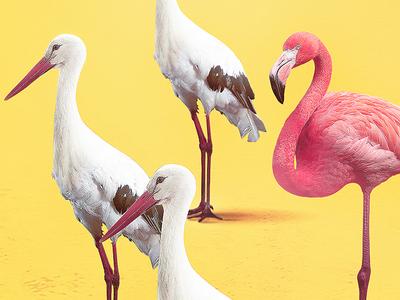 Radler - Regular is boring pink stork radler poster pattern graphic flamingo boring bird beer yellow