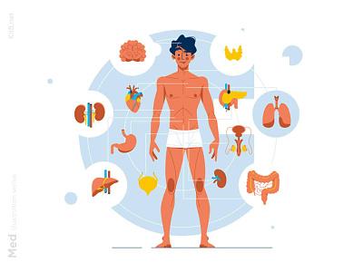 Human body anatomy illustration medicine care health organ anatomy human body man character vector illustration kit8 flat