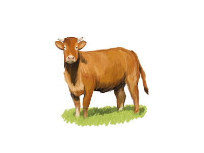Cow illustration farm brush digital art drawing cow