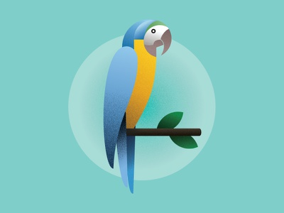 Macaw gradient illustration texture bird macaw