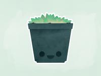 Succulent!