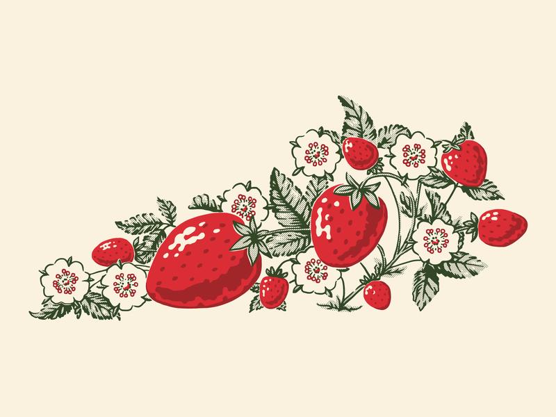 Kentucky Strawberries fruit food strawberry strawberries retro illustration kentucky