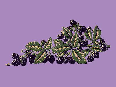 Kentucky Blackberries tee design plants nature fruit blackberries kentucky illustration