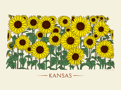 Kansas Sunflower