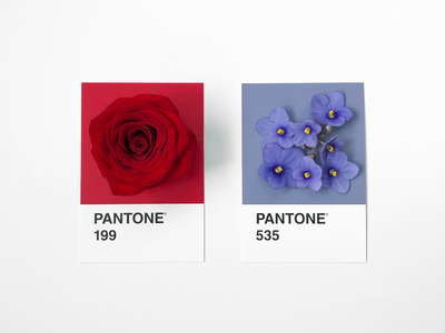 Roses are red, violets are blue floral vday valentinesday valentines swatches violets rose matching colors flowers pantone