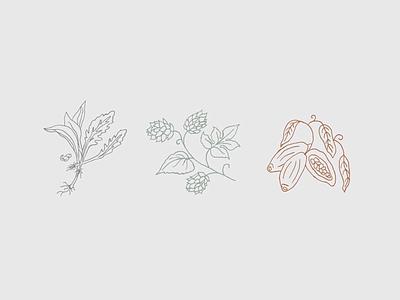 Market Illustrations farm market design greens cacao herb drawing hops linework herbal herbs illustration icons
