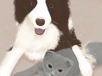 狗狗和猫猫