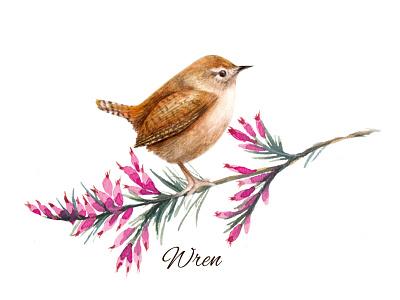 Watercolour Wildlife Bird Illustration Wren painting spring ornithology birds nature animal art animal illustration garden bird illustration wildlife illustration watercolour illustration