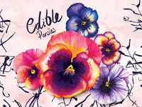 Food Illustration Edible Pansies