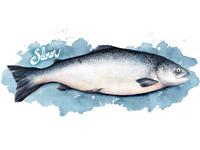 Food Illustration Salmon