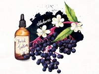 Food Illustration Herbal Medicine
