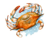 Food Illustration Soft Shell Crab