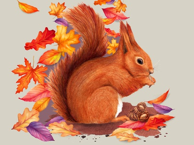 Watercolour Animal Illustration Red Squirrel