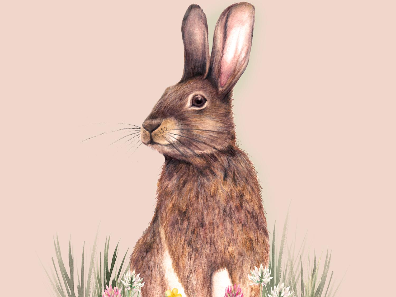 Watercolour rabbit animal illustration