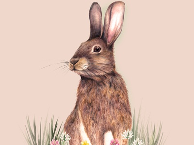 Watercolour Rabbit Animal Illustration nature illustration countryside cute animals bunny rabbit illustration nature