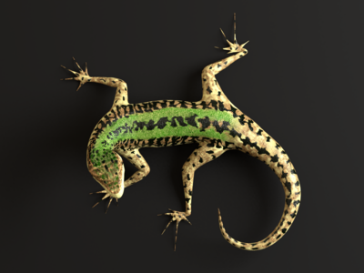 Podarcis sicula lizard 3d Model