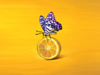 adjooce yellow logo lemon butterfly logo digital illustration corporate id logo