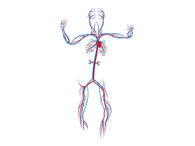 Human Circulatory System WIP