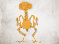 Owl Skeleton Illustration