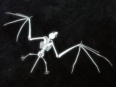 Bat Skeleton Illustration