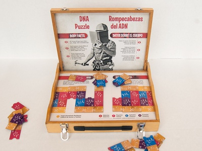 DNA Puzzle science museum exhibit dna biology education anatomy