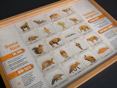 Skeleton Match Puzzle comparative anatomy animals science illustration anatomy skeleton