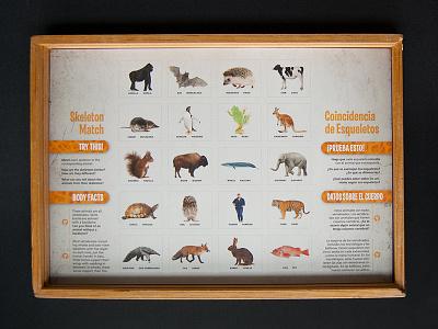 Skeleton Match Puzzle Board (no pieces) comparative anatomy animals science illustration anatomy skeleton