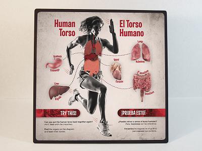 """Human Torso"" Sign science museum exhibit organs biology education anatomy"